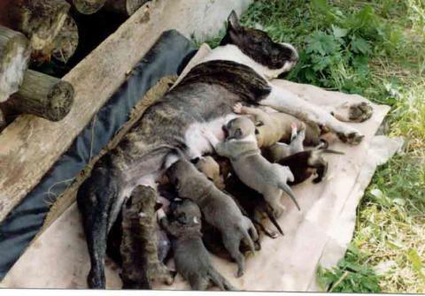 Ева со щенятами