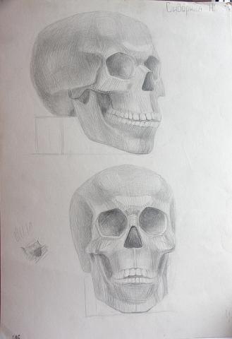Рисунок - черепа